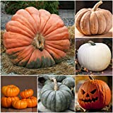 Package of 50 Seeds, Spooky Pumpkin Mixture (Cucurbita pepo / maxima) Non-GMO Seeds by Seed Needs