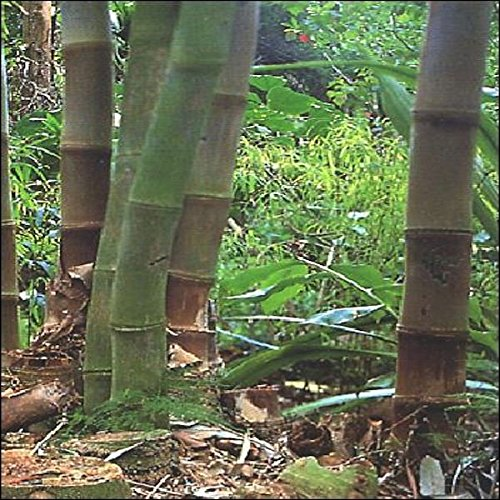 20 semi di zucca gigante atlantic giant la zucca piu for Semi bambu gigante