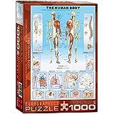EuroGraphics Human Body Puzzle (1000-Piece)