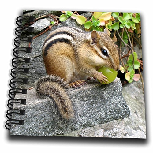 3dRose Chipmunk - Mini Notepad, 4 by 4-Inch (db_3109_3)