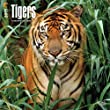 Tigers 2015 Wall Calendar by 2015 Calendars