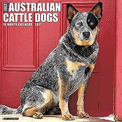 Just Australian Cattle Dogs 2017 Wall Calendar Dog Breed Calendars