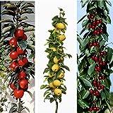 Amazon.de Pflanzenservice Obstpflanzen 3-er Set Säulenobst