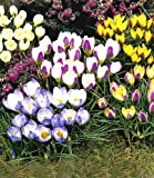 Lawn & Patio - WOLF-Garten Rasen-Starter-D�nger LH 100 f�r 100 qm