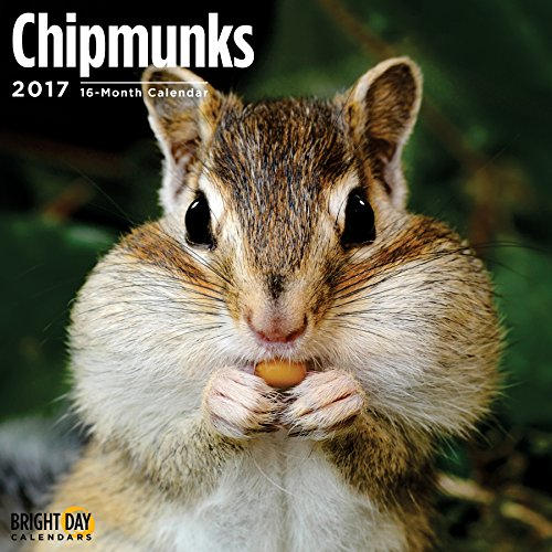 Chipmunks 2017 16 Month Wall Calendar 12 x 12 inches Bright Day Calendars Publishing