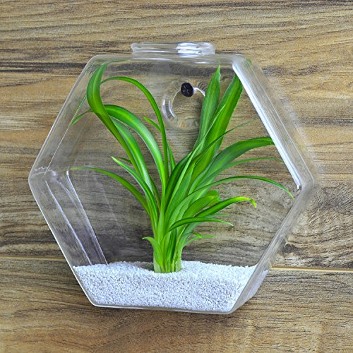 Hexagon shape clear glass plant terrarium small wall for Small glass fish tank