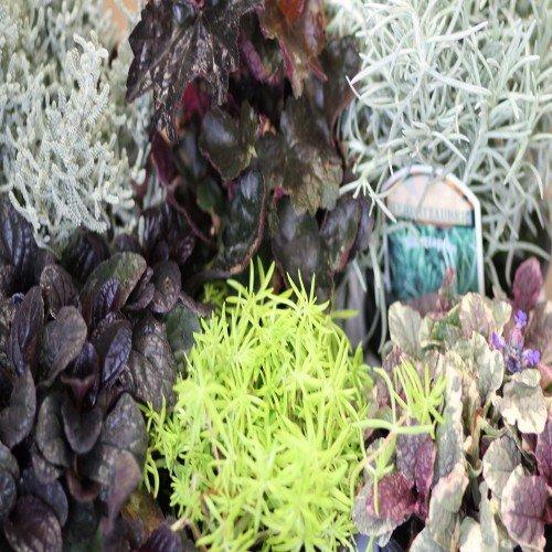 herbstzauber mix2 6 pflanzen sonderpreis. Black Bedroom Furniture Sets. Home Design Ideas