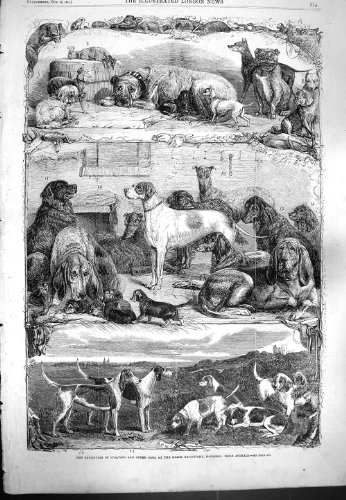 1861 EXHIBITION SPORTING DOGS HORSE REPOSITORY HOLBORN