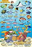 Curacao Reef Creatures Guide Franko Maps Laminated Fish Card 4 x 6