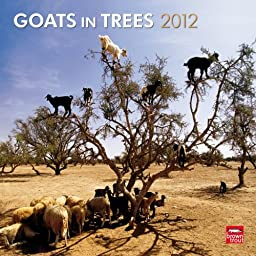Goats In Trees 2012 Square 12X12 Wall Calendar (Multilingual Edition)