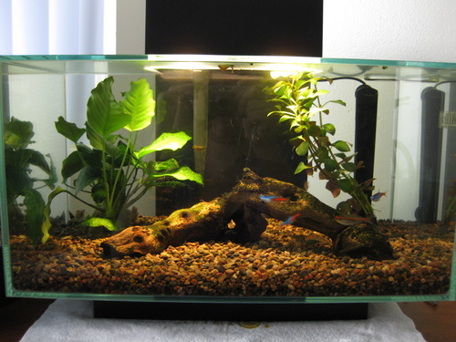 Amazon.com : Fluval Edge Aquarium Set, Burnt Orange, 6-Gallon : Fish Tank Coffee Table : Pet