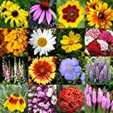 "2,000 Seeds, Wildflower Mixture ""All Perennial"" (16 Species) Seeds By Seed Needs"