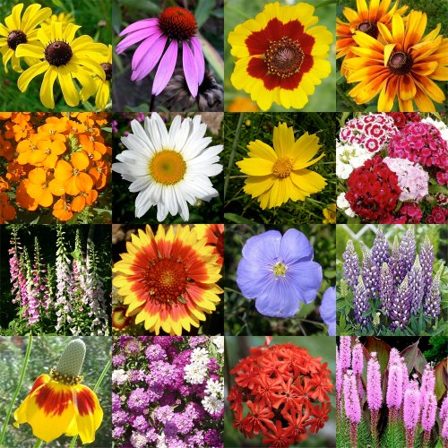 2,000 Seeds, Wildflower Mixture
