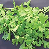 Suttons Seeds 184475 Speedy Veg Leaf Salad Cress Greek Seed
