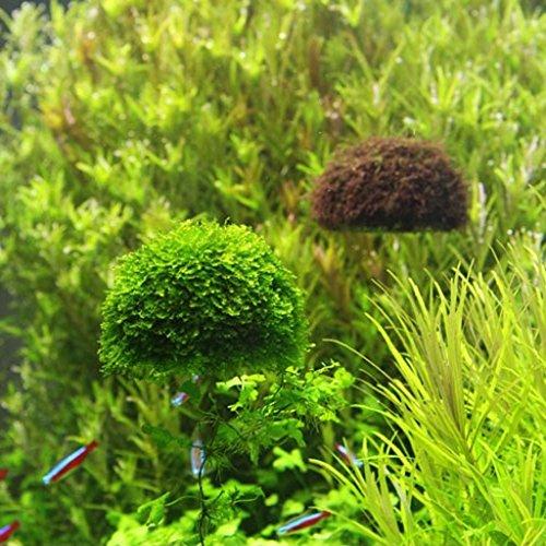 Support boule de mousse flottant d coration pour aquarium for Acheter aquarium boule