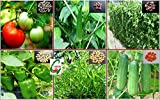 Seedstores : Hybrid Vegetable Seeds : KIT of 6 Items for Kitchen Terrace Top Balcony Poly House Gardening TYPE-B