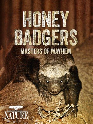 Amazon.com: Honey Badgers: Masters of Mayhem: PBS, THIRTEEN