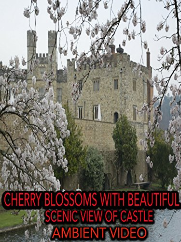 Cherry Blossoms with Beautiful Scenic View of Castle Ambient Video