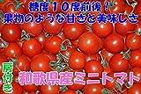 和歌山産 完熟房つき ミニトマト 500g フルーツトマト 完熟トマト 売れ筋 完熟ミニトマト 和歌山県産ミニトマト キャロルセブンミニトマト 高糖度ミニトマト 和歌山産ミニトマト リピーター続出中のミニトマト