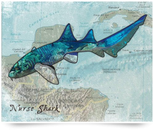 Nurse Shark (Giclee Art Print), Cheryl Burke back-809992