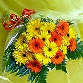 753【お祝い 誕生日 ギフト】ひまわりみたいなガーベラの花束・大輪黄色パスタ咲き・オレンジとイエロー