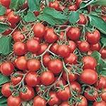 Tomate cerise 80 graines