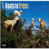 Goats in Trees 2015 Square 12x12 (Multilingual Edition)