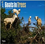 Goats in Trees 2015 Square 12x12