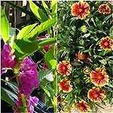 Biocarve Rainy Season Special Flowers-2 Packets