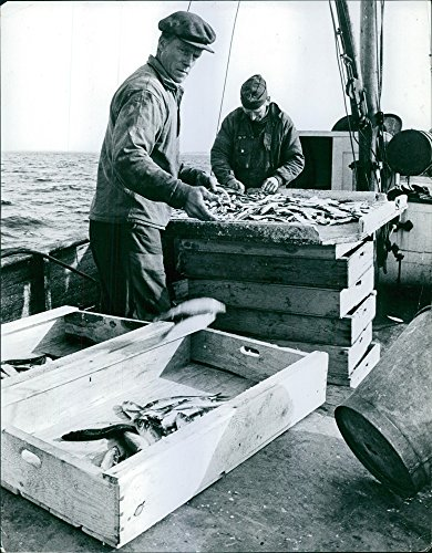vintage-photo-of-men-selecting-fishes-in-boat