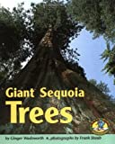 Search : Giant Sequoia Trees (Early Bird Nature)