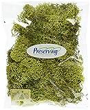 大地農園 プリザーブドフラワー アイスランドモス小袋 (約40g入り) スプリンググリーン DO061071-780