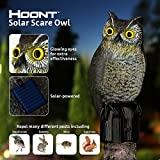 Hoont™ Realistic Owl Scarecrow with Flashing Eyes and Frightening Sound - Solar Powered and Motion Activated - Frightens Birds and Pests Out of Your Property
