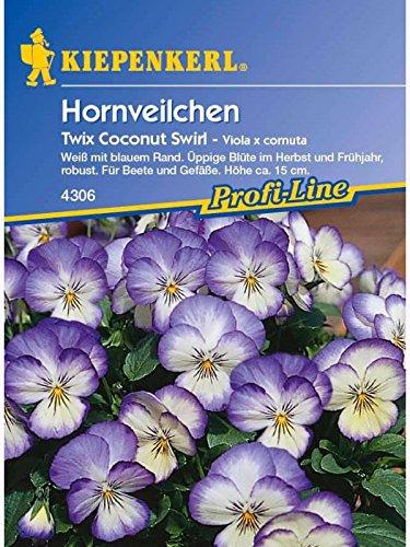 viola-x-cornuta-hornveilchen-twix-coconut-swirl