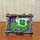 Tree Branch Frame with Real Genuine Four Leaf Clover