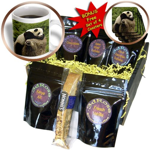 cgb_70207_1 Danita Delimont - Bears - Giant panda bears, Wolong China Conservation, CHINA-AS07 POX0374 - Pete Oxford - Coffee Gift Baskets - Coffee Gift Basket