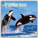 Orcas Killer Whales 2017 Calendar
