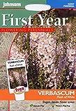 Johnsons Seeds - Pictorial Pack - Flower - Verbascum Flush of White - 100 Seeds