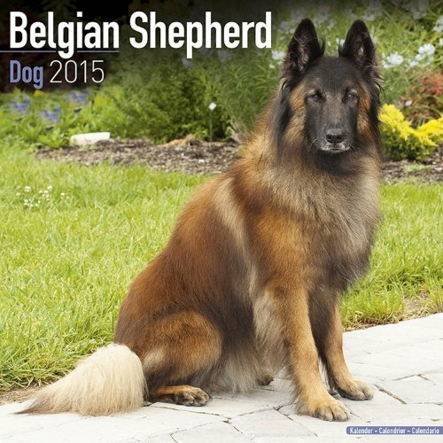 Belgian Shepherd Dog Calendar - Just Belgian Shepherd Dogs Calendar - 2015 Wall calendars - Dog Calendars - Monthly Wall Calendar by Avonside