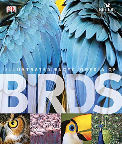 The Illustrated Encyclopedia of Birds (Dk)