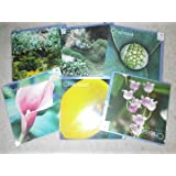 Chelsea Inspirations greetings cards (Pack of 5)by RHS