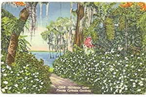 Postcard Gardenia Lane Cypress Gardens Florida Office Products