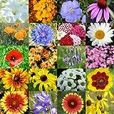 """2,000 Seeds, Wildflower Mixture """"Dryland"""" (20 Species) Seeds By Seed Needs"""
