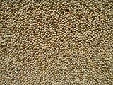 White Proso Millet - 10 lb bag-Free Shipping