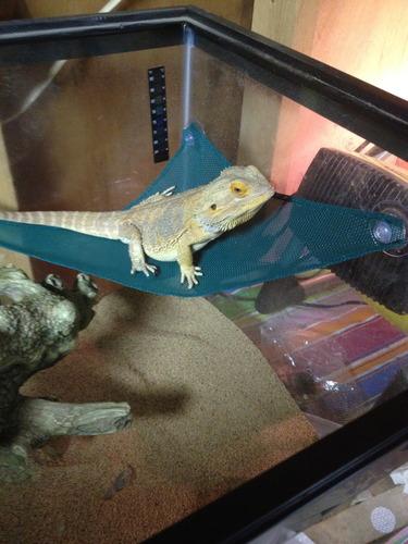 Amazon Com Zoo Med Mesh Reptile Hammock 17 Inch