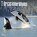 2016 ORCAS KILLER WHALES WALL CALENDAR - BrownTrout {jg} Great for mom, dad, sister, brother, grandparents, aunt, uncle, cousin, grandchildren, grandma, grandpa, wife, husband.