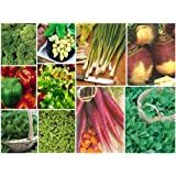 10 packs of vegetable seeds - Spinach,Lettuce,Rocket +by Haddons