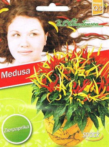 Zierpaprika Medusa Geschenk Idee