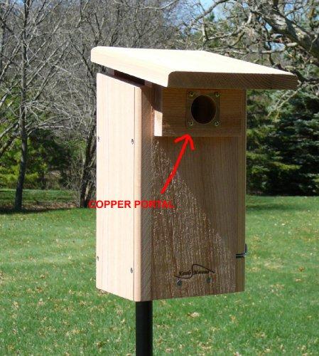 Kettle Moraine Copper Portal For Eastern Bluebird Bird