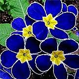Blue Evening Primrose 100 pcs Orchid Ideal Garden Potted Seeds Rare Flower Plant Seeds